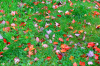 leaf_color_collage.png -