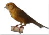 canary_1.3_alpha.png -