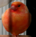 canary_three_2.png -