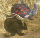 turtle_from_above.png -