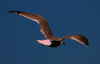 seagull_floating.png -