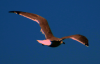 seagull_floating2.png -