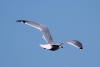 seagull_floating1.1.png -