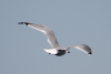 seagull_floating1.png -
