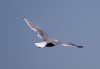 seagull_floating3.png -