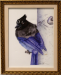 stella_blue_jay_1200.png -