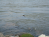 churning_east_river_from_grand_ferry_park_2006_00564.png -