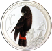 red_tailed_black_cockatoo.png -