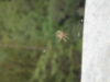 sf_2007_spider_24.png -